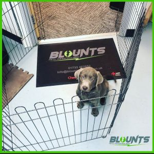 Blounts Electrical new puppy